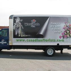 Click to view album: Trucks Full Wrap